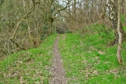 Footpath in Tursdale Wood