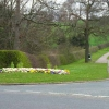 Spring flowers on the road to Mainsforth
