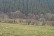 Luscombe Wood