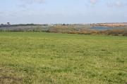 Pasture on the edge of Stithians Reservoir