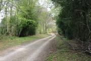 woodland ride, Wylde Warren