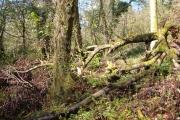 Woodland in Horsham Cleave