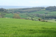 Fitzhead: view from above WheatleyÂ's Copse