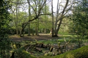 Shady woodland alongside the Beaulieu River, New Forest