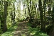 Clayhanger: Brockham Wood