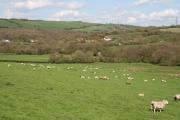 Bampton: towards Hookways Farm