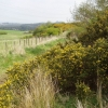 Gorse-lined footpath