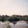 Pond, Willow Holt, 1989