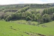 Challacombe: Old Close Bottom