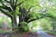 Harcombe Woods