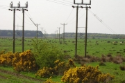 Wet ground and power lines