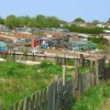 Allotments at Stillington