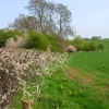 Hedgerow along Bishopton Beck