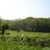 Woodland Nr Pebsham East Sussex