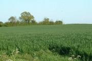 Bishopstone fields