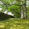 Wall and beeches