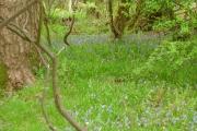 Bogside Wood