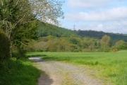 Woodland Wood