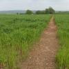 Footpath to Hayne Barton