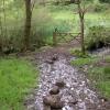 Wet valley bottom at Great Barton Down Brake