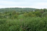 Clayhidon: towards Grants Farm