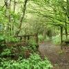 Broadhembury: Bridleway on Stafford Hill