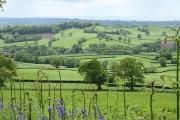 Awliscombe: towards the village