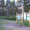 Rowney Warren pine woodland, Southill, Beds