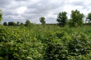 Rodway Hill Farm