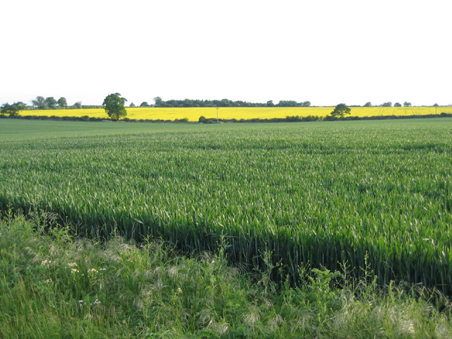Farmland from Great Lane, Haynes, Beds