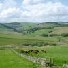 Borders hill farm
