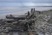 Driftwood at Linklet Bay