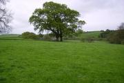 Farmland Lawkland Green