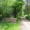 Woodland ride, Whitty Hill