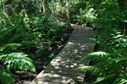 Raised Walkway in Pendarves Woods