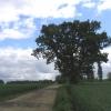 Farm Track near Witney Woods