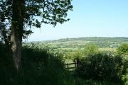 Uffculme: above Bodmiscombe Wood Farm