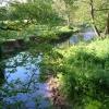 River Tale near Cadhay