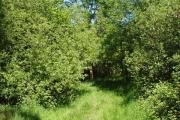 Piddington Wood nature reserve, The Woodland Trust