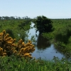 Water Ditch