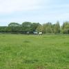 Horses in a field near Wrenmore Farm.