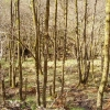 Woodland, Glen Kinglas