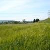 Calcoed farmland