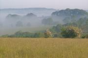 Misty morning at Kelland Copse