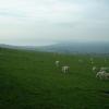 Farmland, looking towards the north coast