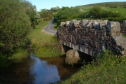 Bridge and Belted Galloways