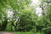 Woodland near Godolphin House