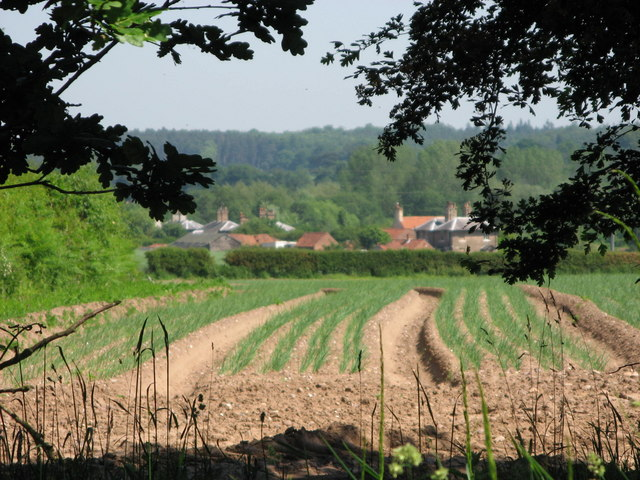 Farmland near Budby
