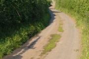 Lane near Halstow, Tedburn St Mary