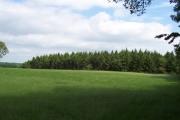 Hubber Wood